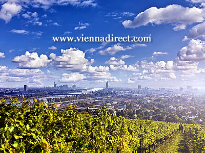 Vineyards on the hills above Vienna